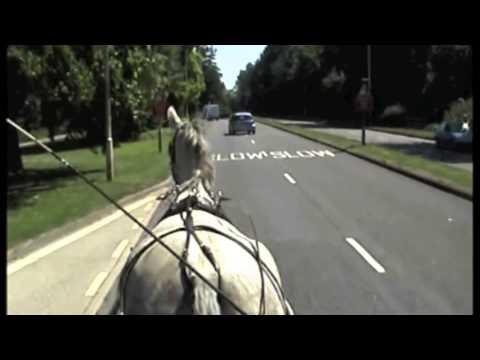 Breaking a grey gelderlander horse for carriage driving - Barry Hook