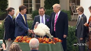 President Donald Trump pardons 2017 Thanksgiving turkeys in traditional ceremony
