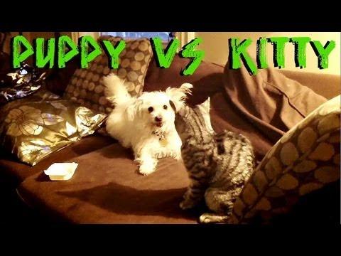 PUPPY VS KITTY