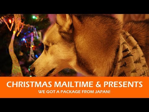 THOR AND BONZAI OPEN THEIR GIFTS | Christmas Mailtime 2017!