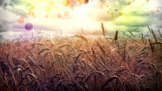 Relaxing Guitar Music | Easy Listening Guitar Music | Relax, Study & Ambience