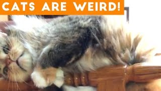 Cats are Weird | Silliest Cat Compilation 2018 | Funny Pet Videos