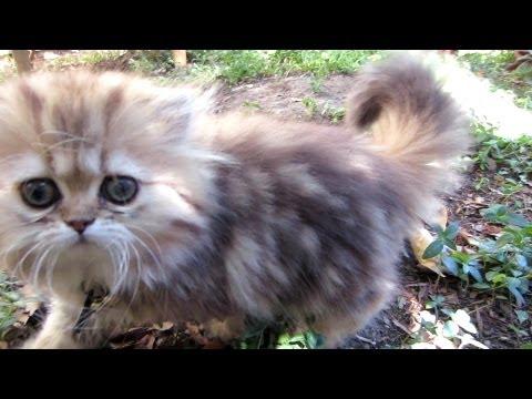 12 08 06 Persian kitten morning romp - the K girls