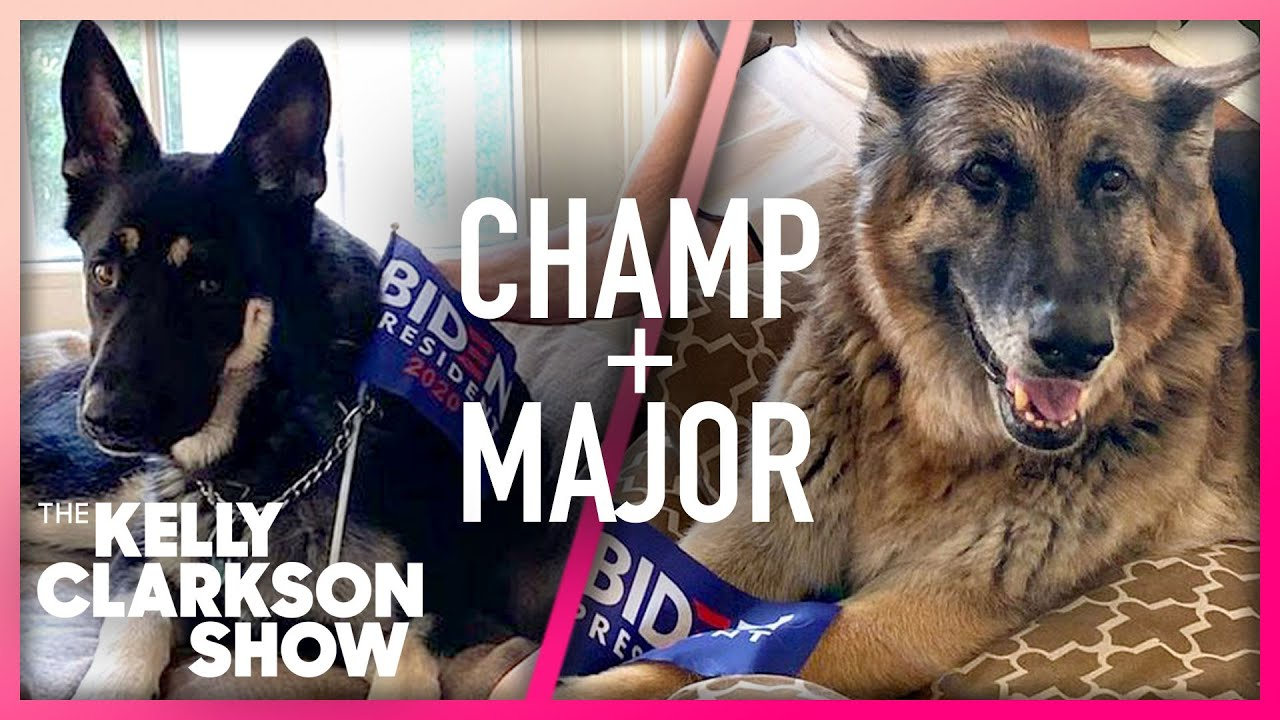 First Dogs Champ and Major Say Hello To Kelly