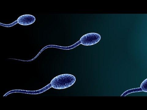Agenda 21 Working! Sperm Counts Halved in 40 Years