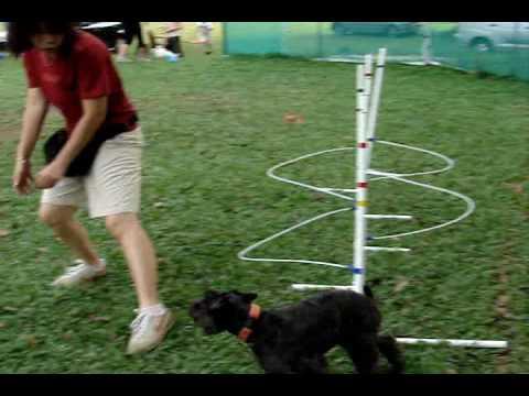 Dog Agility- Practice Weave Poles