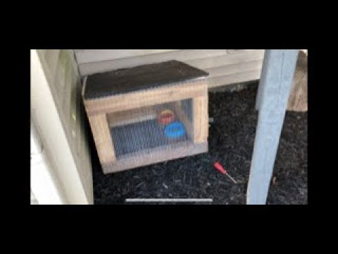 DIY how to build a chicken pen house for a rescued duck