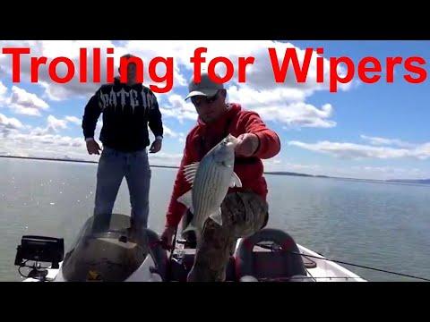 Fishing Willard Bay trolling for Wipers in Utah