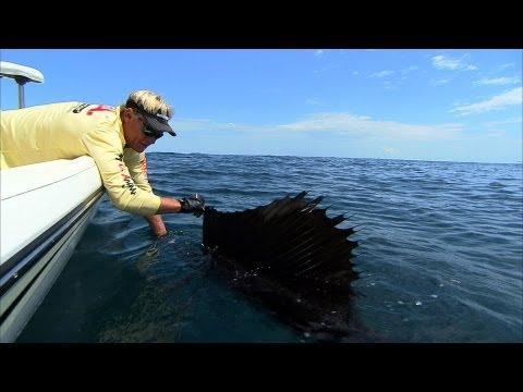 Sailfish Fishing Florida and Catching Cobia Ocean Fishing