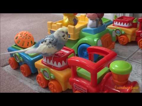 Mango Demos How to Activate His Choo Choo Train