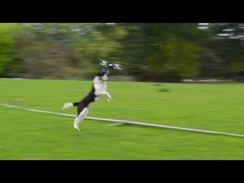 How to excercise your dog using a drone