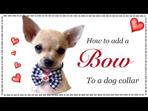 How to make a dog bow collar with Lisa Pay