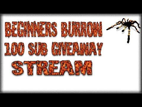 100 Sub Giveaway Live Stream - Beginners Burrow