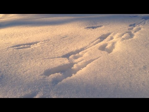 Tracks in the Snow - Quiet Moments