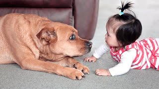 When KIDS MEET BABY ANIMALS for the FIRST TIME - Super CUTE & FUNNY