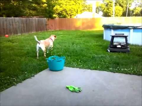 My Dog Barking, Then Barking In Reverse