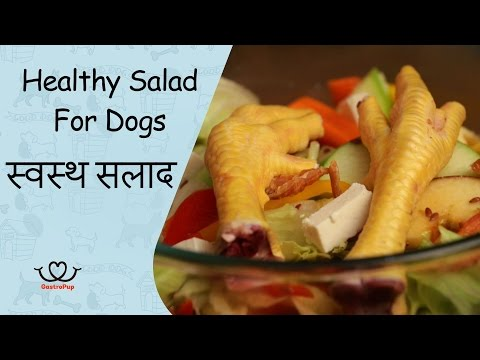 How To Make Healthy Salad For Dogs || Gastro Pup || Dog Food