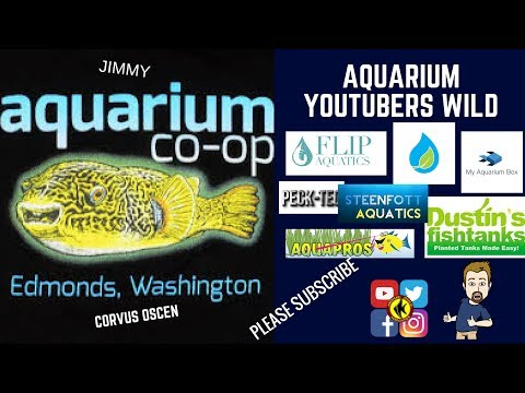 SO Many AQUARIUM YouTubers to list MUST SEE!