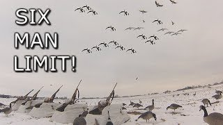 Six Man Goose Limit!!!   Late Season Cornfield Hunt