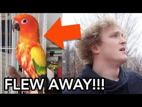 MY BROTHERS PARROT FLEW AWAY (PRANK WARS)