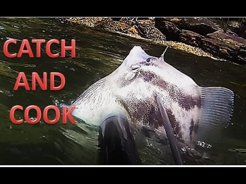 Spearing A BIG Leatherjacket Catch And Cook Sydney Harbour spearfishing
