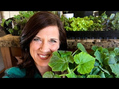 🍅 LIVE: Growing Indoor Veggie Seedlings:  Your Most Common Questions Answered! (Replay)