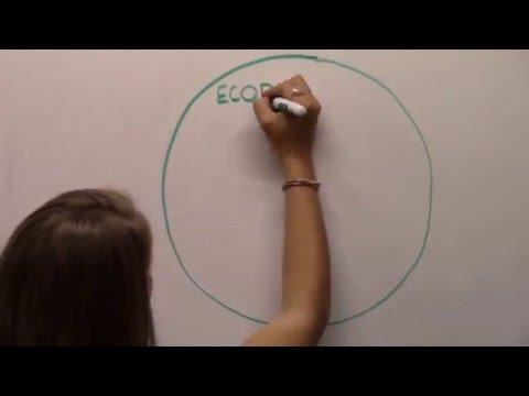 EcoDesignation Comparison