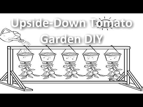 How to make an upside down tomato garden