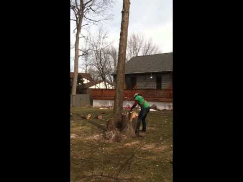 Mark cutting a tree to fall a different direction