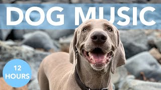 Sweet Dreams Dog Music! Songs to Help Your Anxious Dog!