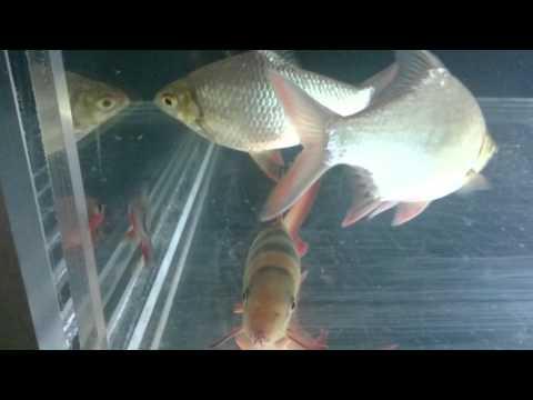 Summer update and new Acrylic aquarium.