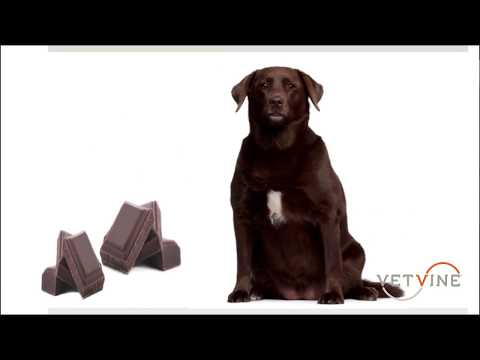 Hydrogen Peroxide Use for Inducing Vomiting in Dogs