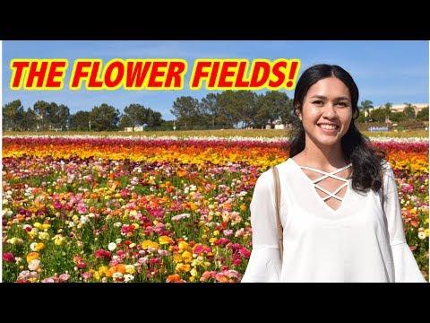 SECRET CARLSBAD FLOWER FIELDS 2018!