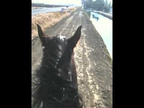 Approaching scary or spooky object on horses -  Understanding horse fear - Rick Gore Horsemanship