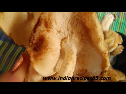 Shiitake Mushroom - About, Nutritional Facts and much more
