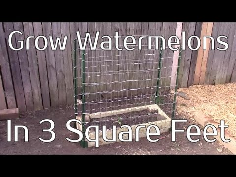 Grow Watermelons In 3 Square Feet