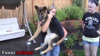 Cute and Funny Big Dogs Thinks They