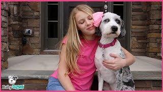 HAPPIER PARODY Marshmello ft. Bastille - Mom & Teen Music Video