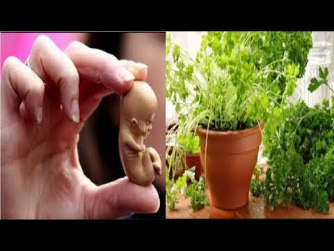 Attention, very careful with this herb… Parsley for abortion
