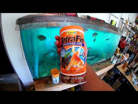 How To Catch & Keep Bait Alive!!