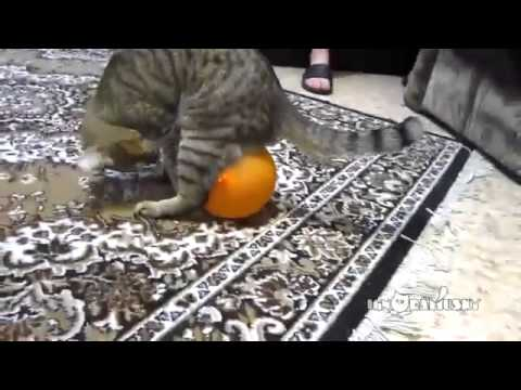 dumb cat doesn t understand static electricity 360