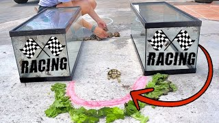 Download OLYMPIC TORTOISE RACE! Who Will Win? Video
