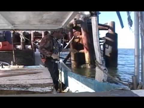COMMERCIAL FISHING FOR SHEEPSHEAD IN SOUTH LOUISIANA