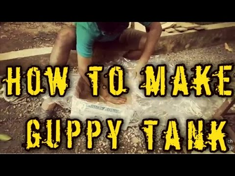 How to make a guppy fish tank