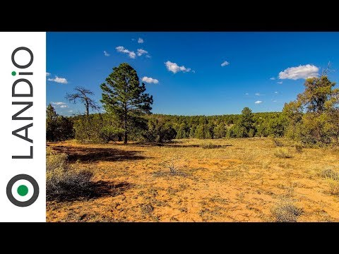 SOLD : Land For Sale in New Mexico : 4.28 Wooded Acres on a Corner Lot in New Mexico