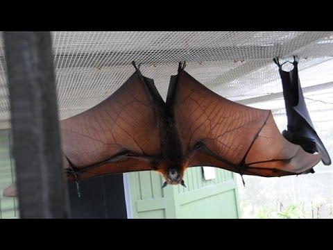 How Do Bats Land?