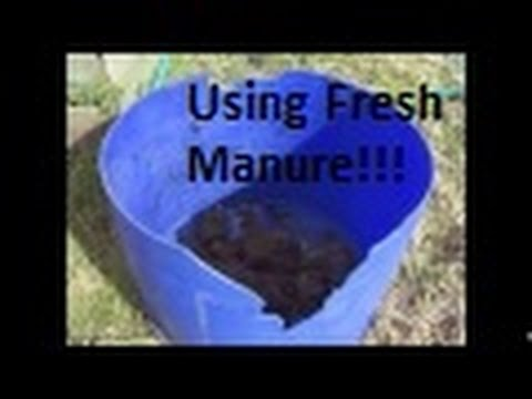 How To Use Fresh Chicken Manure In The Garden!!!