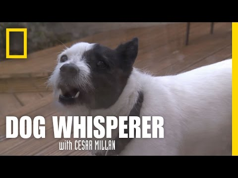 Spinning Mylo | Dog Whisperer