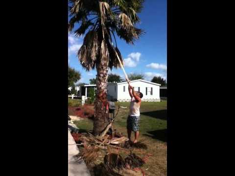 Redneck way to prune palm trees