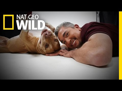 Daddy's History | Cesar Millan: Love My Pitbull
